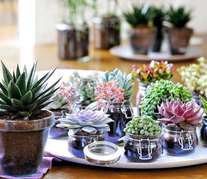 plantas para el diseño de interior suculentas